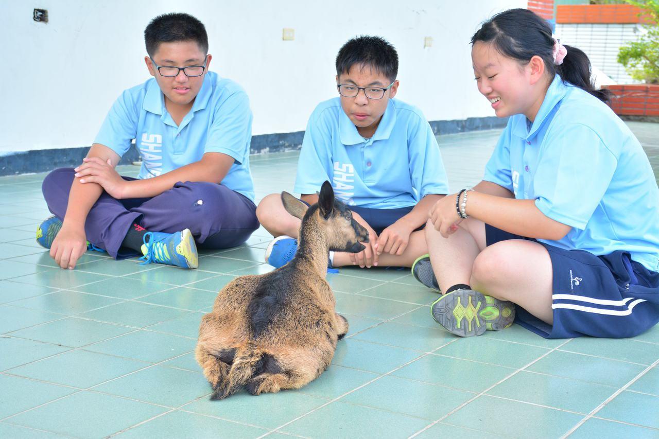台南市山上國中學生與山羊感情濃厚,學生下課會找山羊聊天互動。記者吳淑玲/攝影