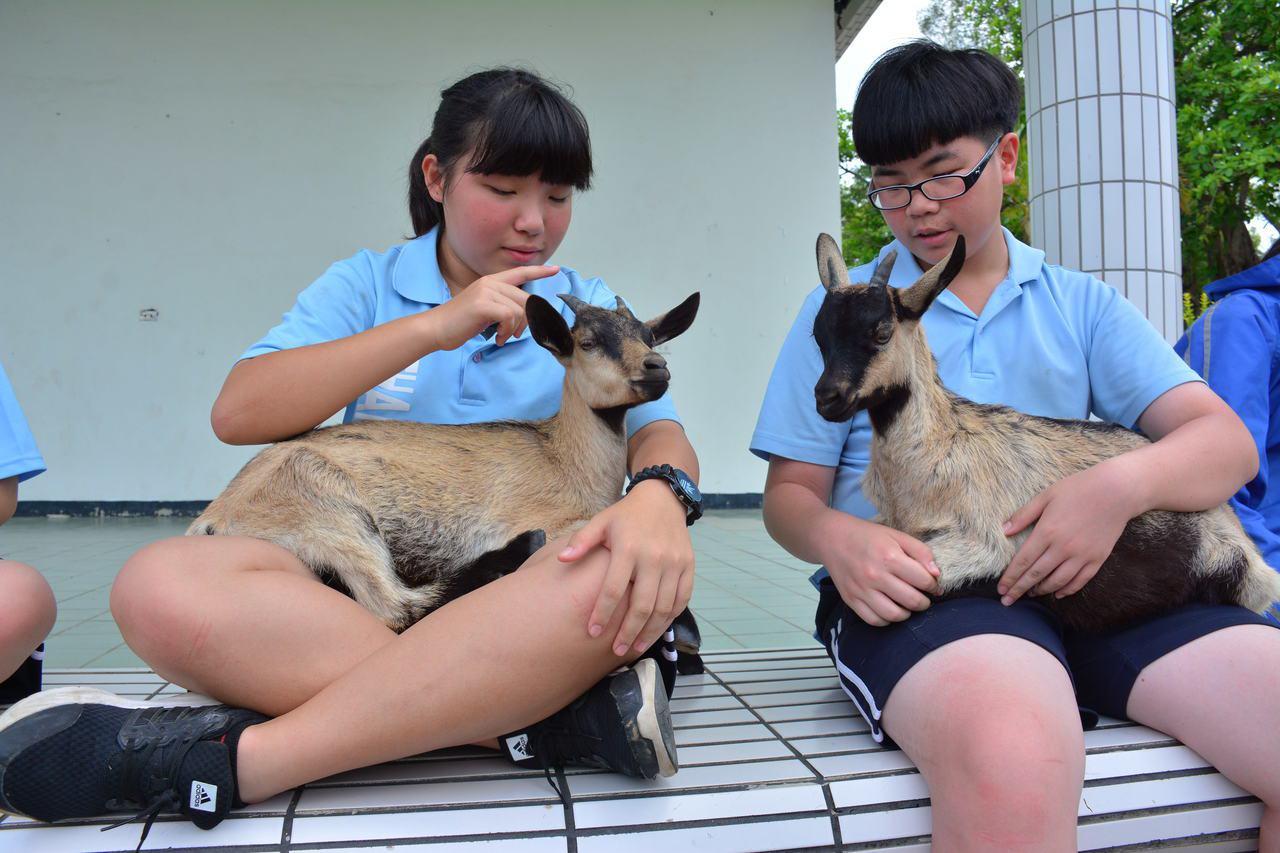 台南市山上國中學生與山羊建立濃厚感情。記者吳淑玲/攝影