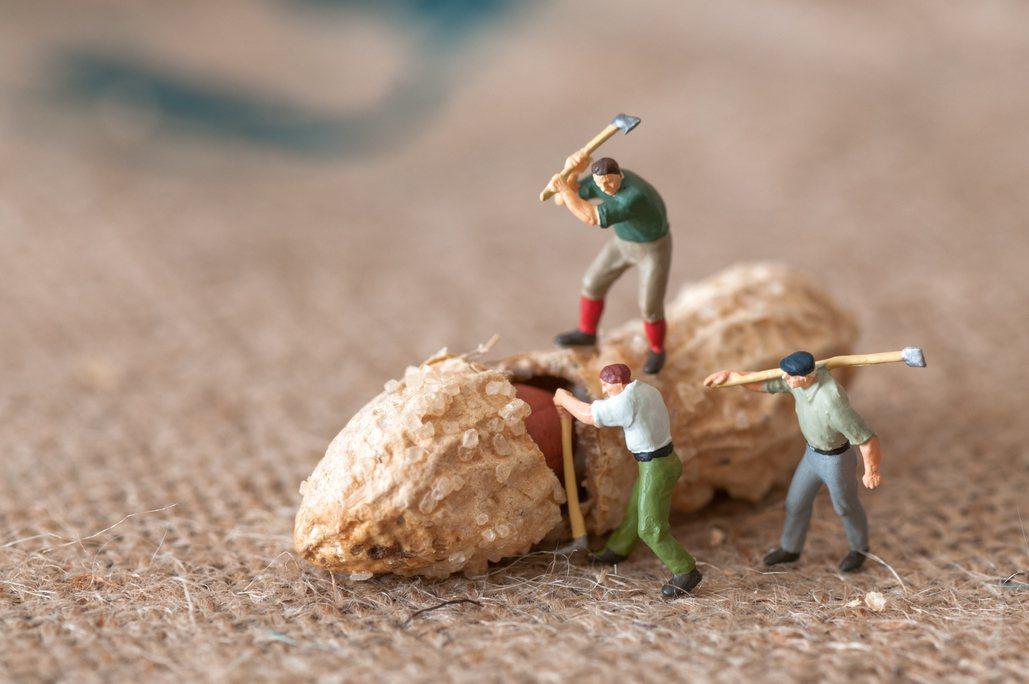 嘉義大學校長邱義源,研究花生40年,終於找到花生被稱為「長生果」的科學證據。 圖...
