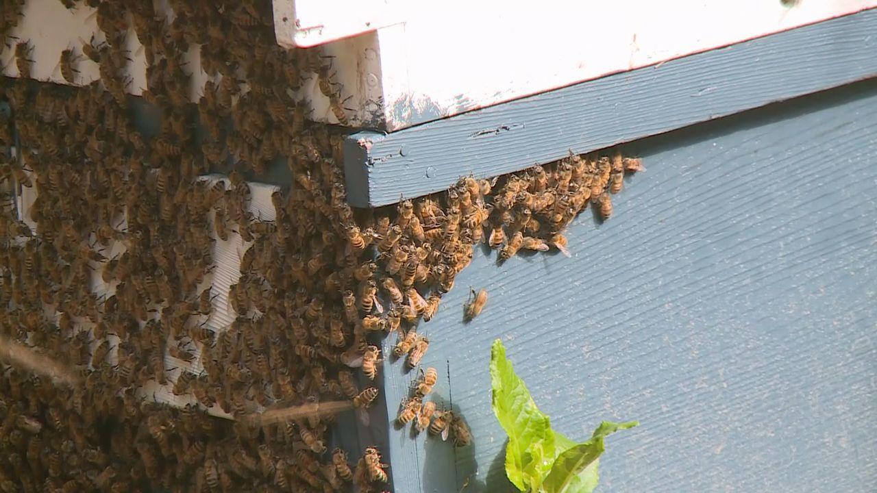 蜂農把蜂箱運到中寮山區,遲遲等不到荔枝樹開花。記者張家樂/攝影