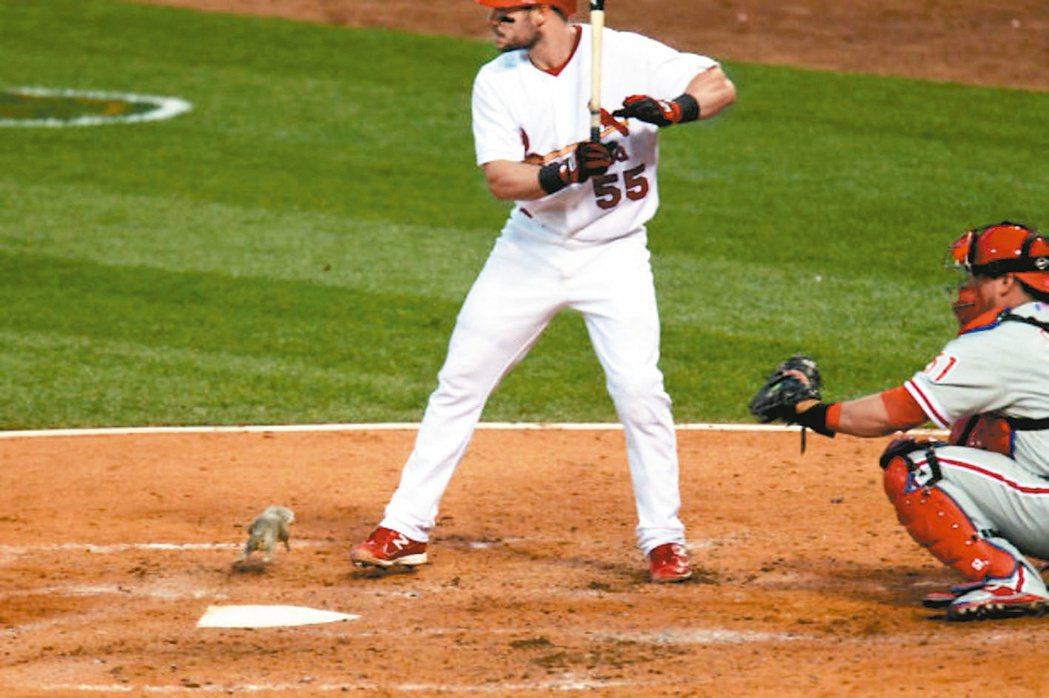 2011年紅雀贏得世界大賽,「逆轉松鼠」扮演幕後功臣。 取材自網路