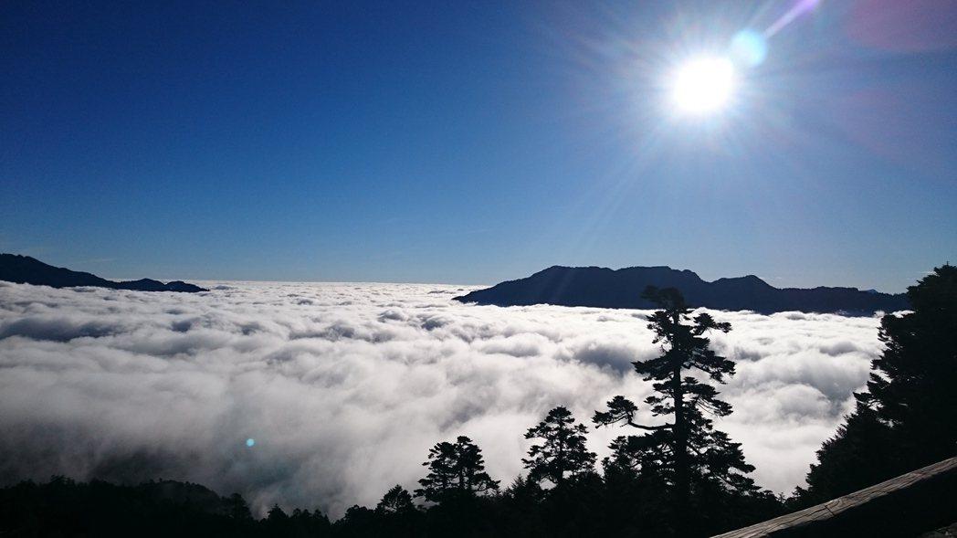 合歡山國家森林遊樂區,除了賞雪,雲海也是一絕。 農委會林務局/提供