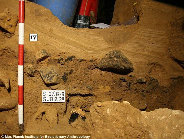 在西班牙ElSidrón考古遺址的Galeríadel Osario(骨骼隧道)...