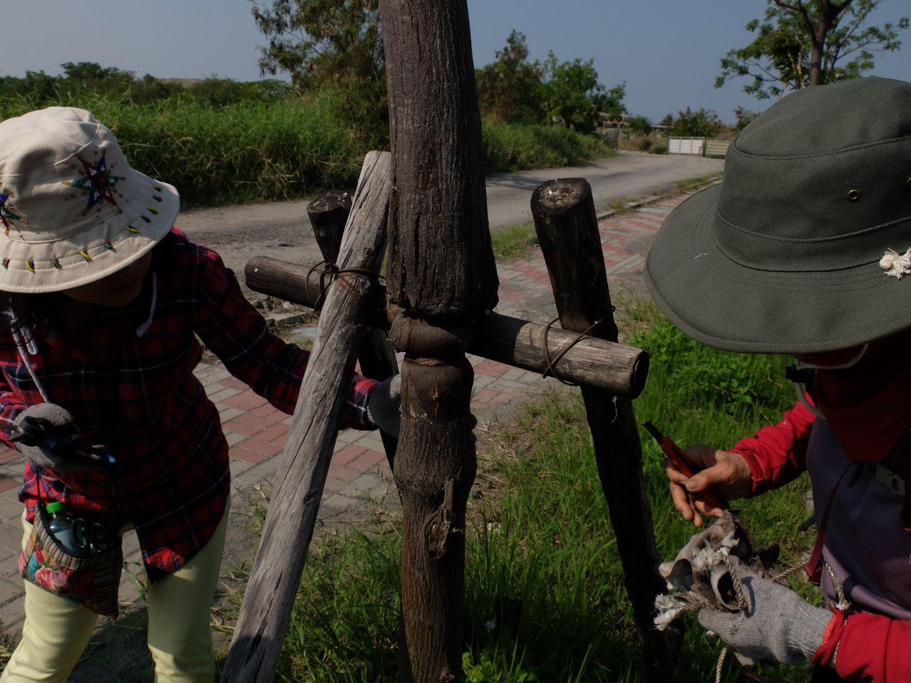 志工阿嬤解開束縛行道樹的繩索。圖/志工林翊涵提供