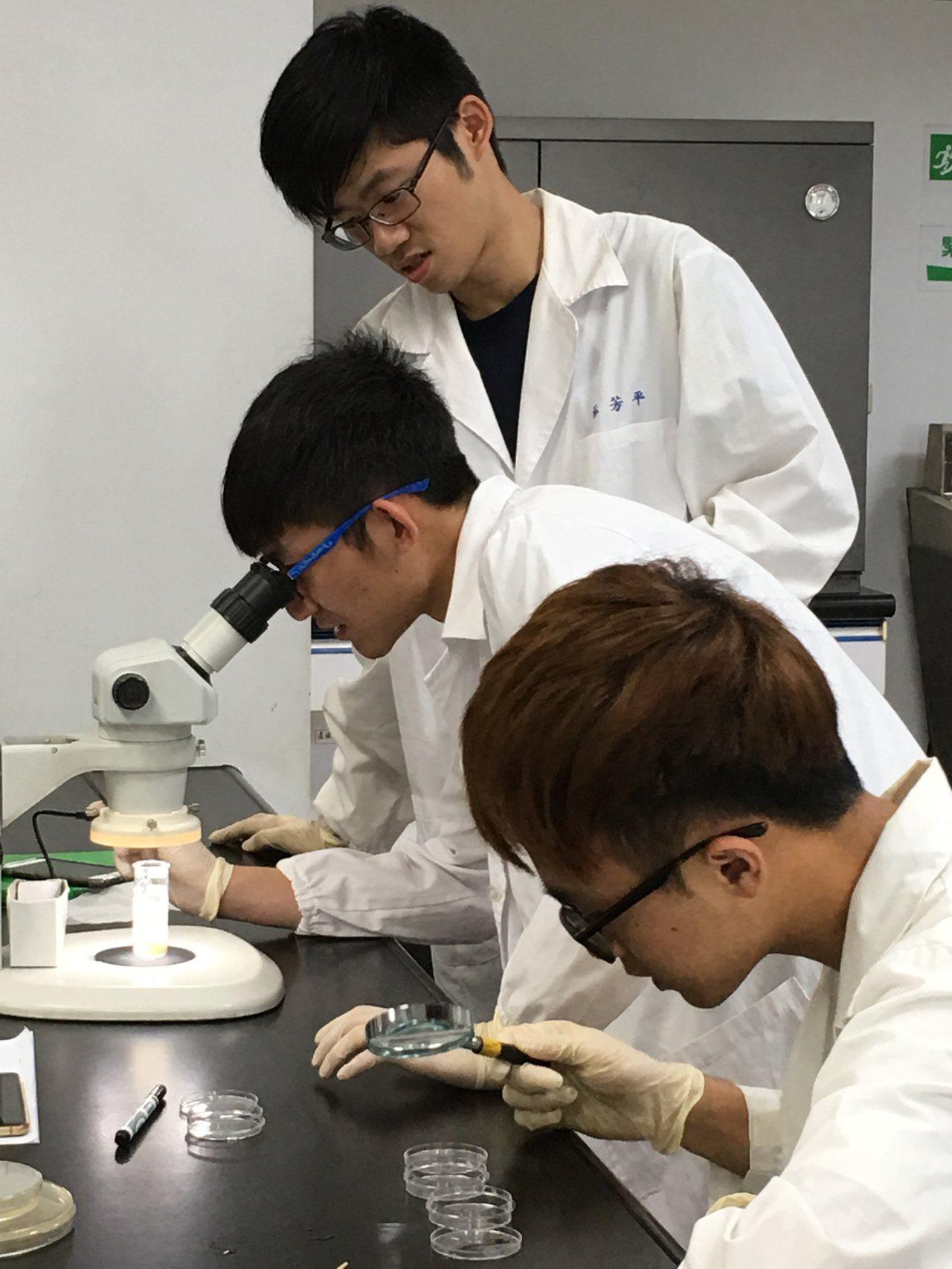 學生透過斑馬魚與果蠅進行生物實驗。圖/嘉南藥理大學提供
