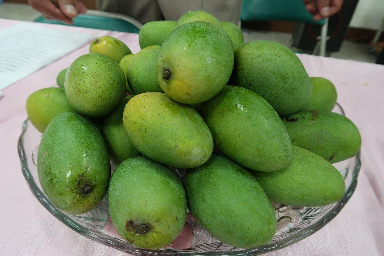今年的土芒果上市了,屏東縣鹽埔鄉是土芒果重要產地。記者翁禎霞/攝影