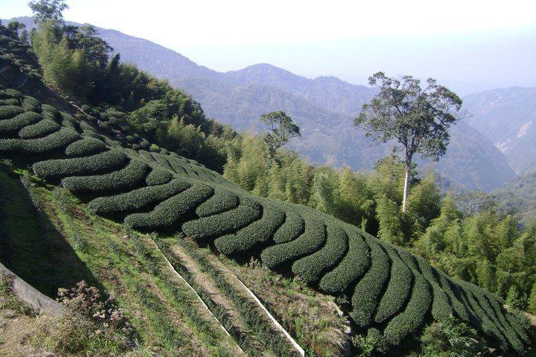 台灣坡地內宜農、宜牧地之查定與超限與否之認定,並非採用「環境敏感地」與「承載力或...