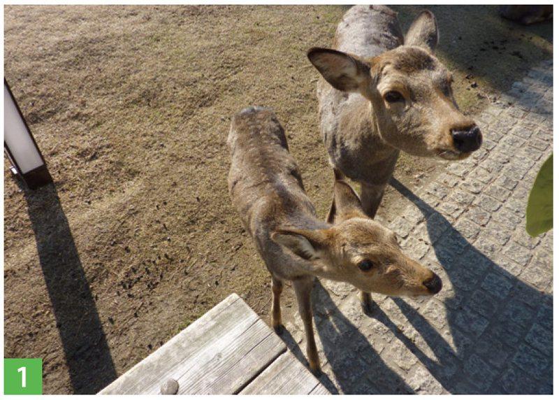鹿群的無辜眼神,令人的心融化了!