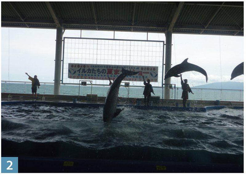 靈巧活潑的海豚表演相當精彩