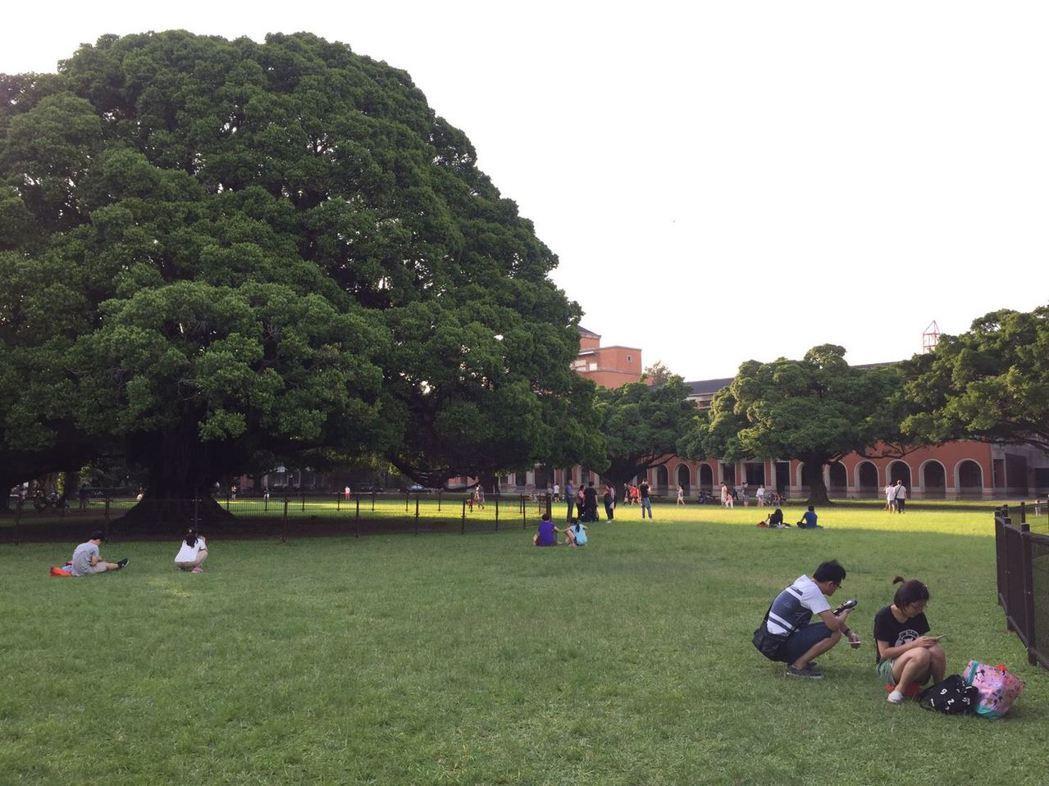 成大化學系今年大學個人申請竟「抱蛋」,完全沒招到學生,圖為該校知名大榕樹景點。 ...