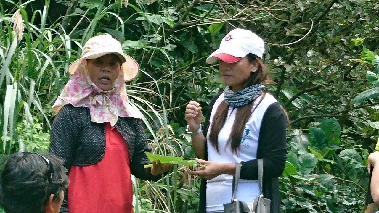 學員學習分辨芋頭種類。圖/蘭嶼鄉公所提供