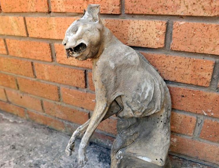 整理花園驚見乾枯貓屍 屋主估「木乃伊貓」已存在30年