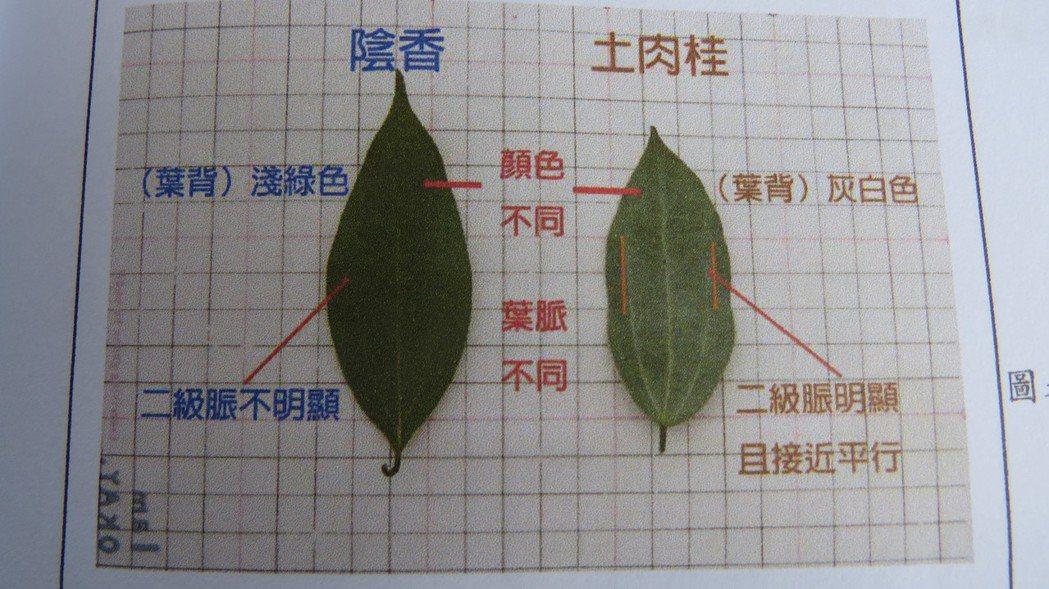 大坑2人組記錄台灣植物,希望散播生態教育種子到各個角落。 記者范榮達/攝影