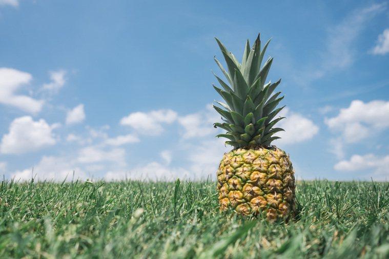 炎炎夏日,意味著鳳梨的季節到了,這季節的鳳梨不僅清爽甜美,更是消暑聖品!鳳梨富含...