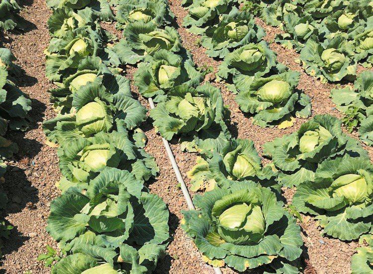 4月物價食物類跌2.38%,主因蔬菜及蛋類分別跌34.54%及8.20%,但水產...
