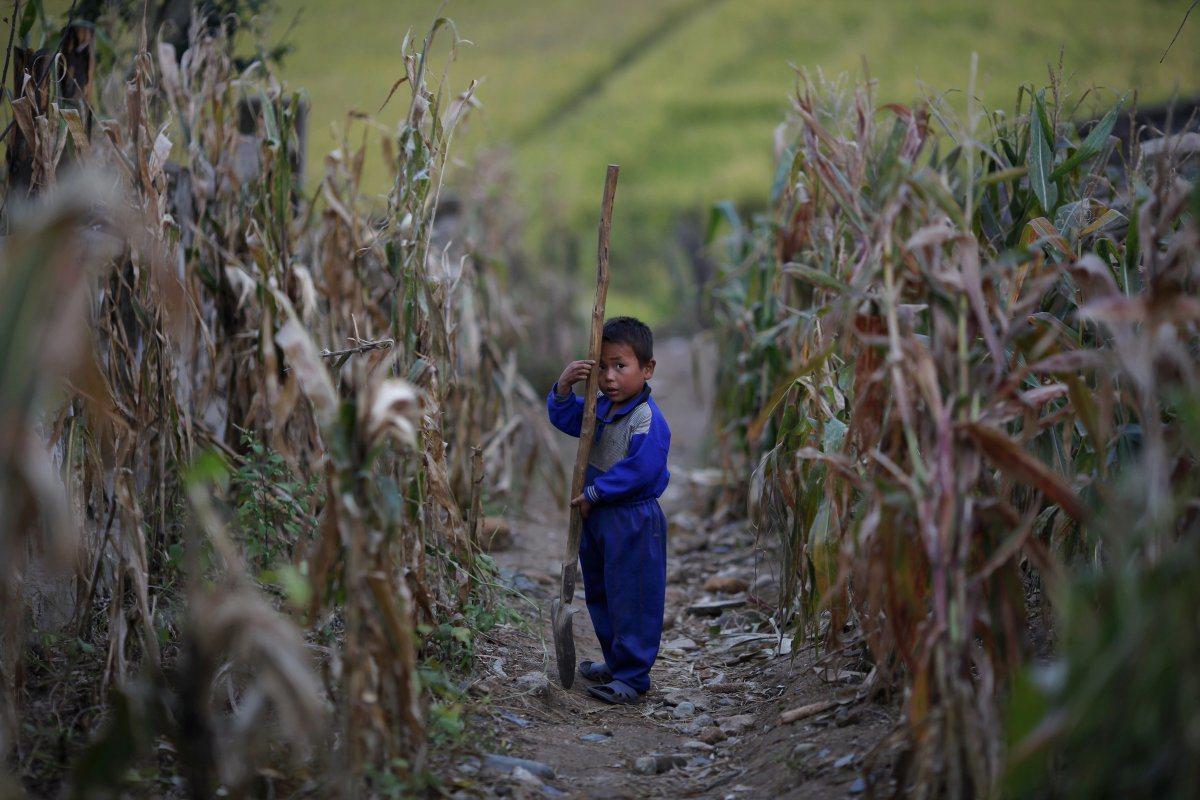 居住在首都平壤以外地區的小孩很小就必須在北韓的農場工作,強迫勞動占北韓經濟產出的...