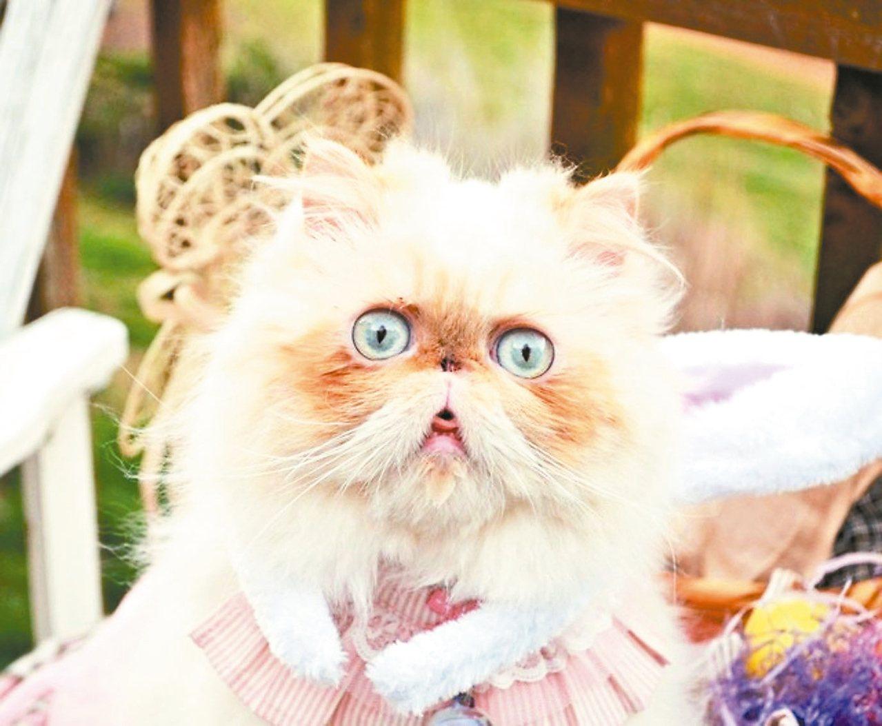 養喵星人的飼主們,是否曾被貓咪用額頭頂撞過呢?專家表示,當飼主被貓咪用額頭頂撞,有許多情感意義在內,其中一項就是「貓咪想將你納入牠的群體」。