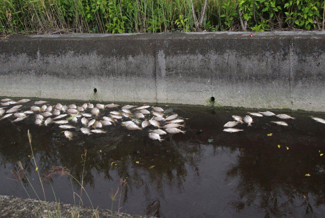 環保團體呼籲政府改善河川水質及汙染。 聯合報系資料照片/記者林敬家攝影