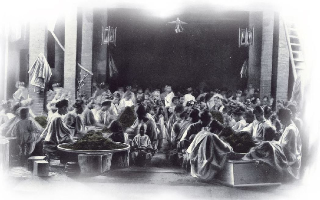 大稻埕揀茶的女工們。圖/國立臺灣歷史博物館蒐藏品