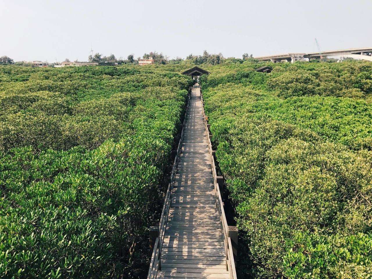 新豐紅樹林生態館。圖/達拉提供