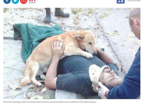 阿根廷一男子因修剪樹枝不慎從高處摔落,當場失去意識,愛犬一直趴在主人身上,不肯離開。