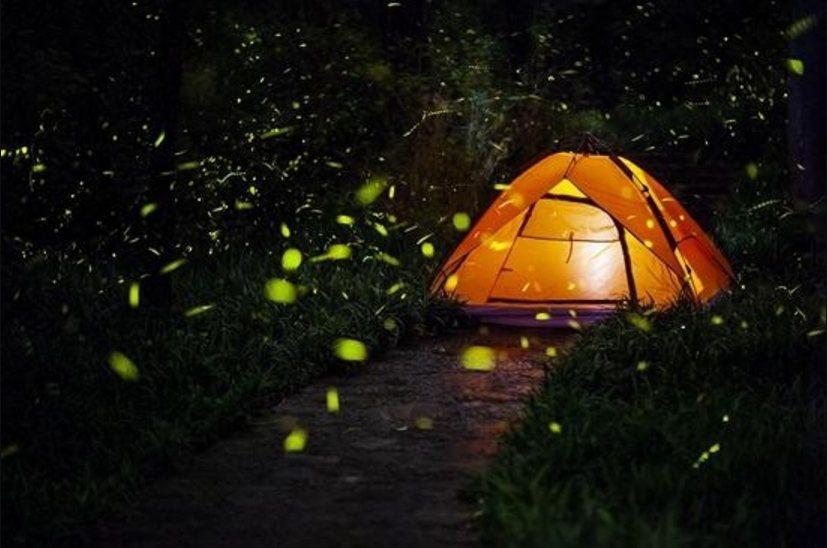 中國大陸去年一共在20多個省市舉辦100多場螢火蟲展,每一場展覽使用的螢火蟲從數...