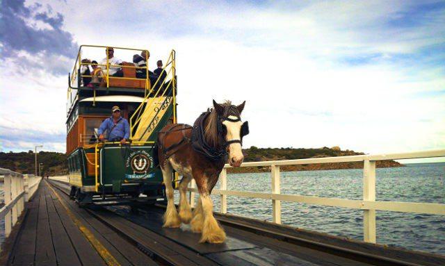 ・全澳唯一的「馬拉車」就在維克多港。(圖/travelingislanders)
