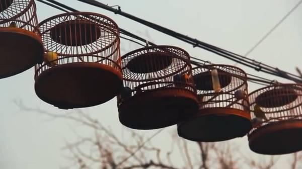 聲音是北京文化的一部分,老北京人有養鳥養蟲的習慣。 圖/摘自網路