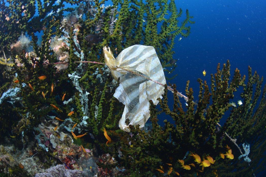 卡在珊瑚礁上的垃圾。Yorko Summer/提供