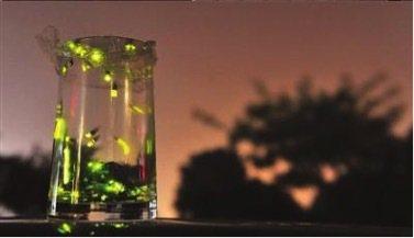 為製造放飛的浪漫,大陸網路買賣螢火蟲盛行。 圖/取自網路