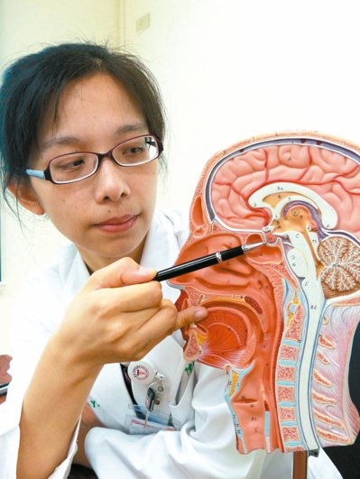 圖為腦下垂體。 本報資料照片