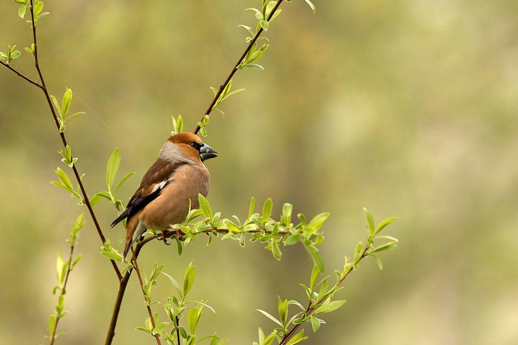 研究:戶外多賞鳥看樹 有益減輕壓力防憂鬱 圖片/ingimage