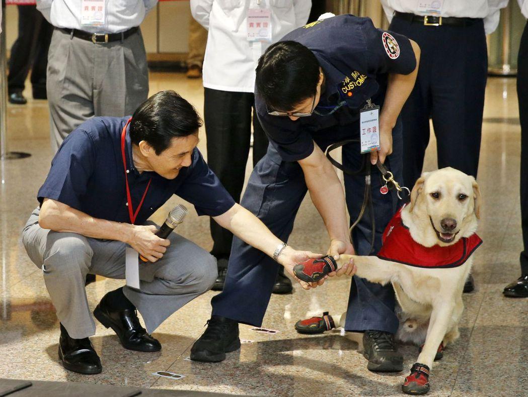 前總統馬英九視察桃園機場搜尋毒品演練,蹲身與緝毒犬Yogi握手,牠卻把頭撇向另一...