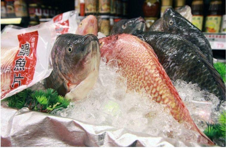 台灣鯛。圖/本報資料照片