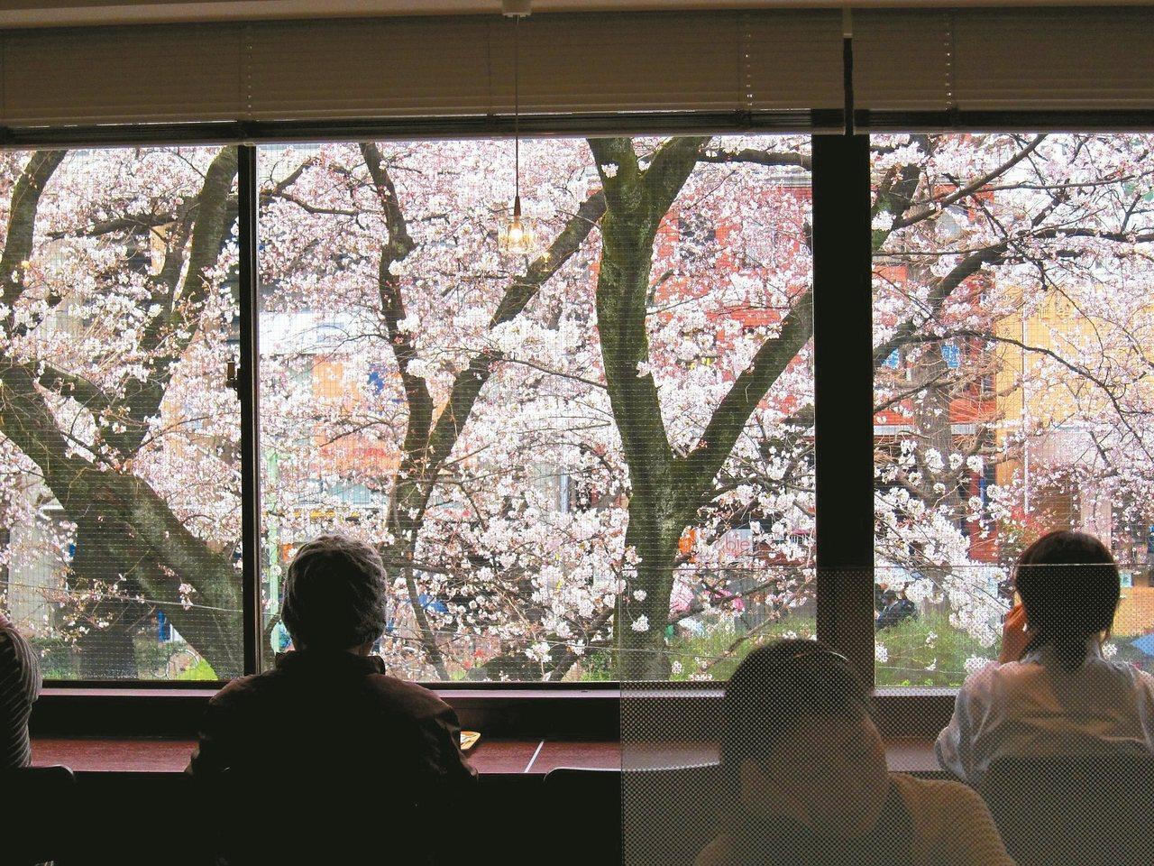 大地回暖,櫻花盛開,聚焦了人們的眼光。 黃雅歆/圖片提供