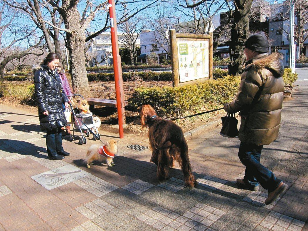 狗兒不怕生,也拉近了人與人之間的距離。 黃雅歆/圖片提供