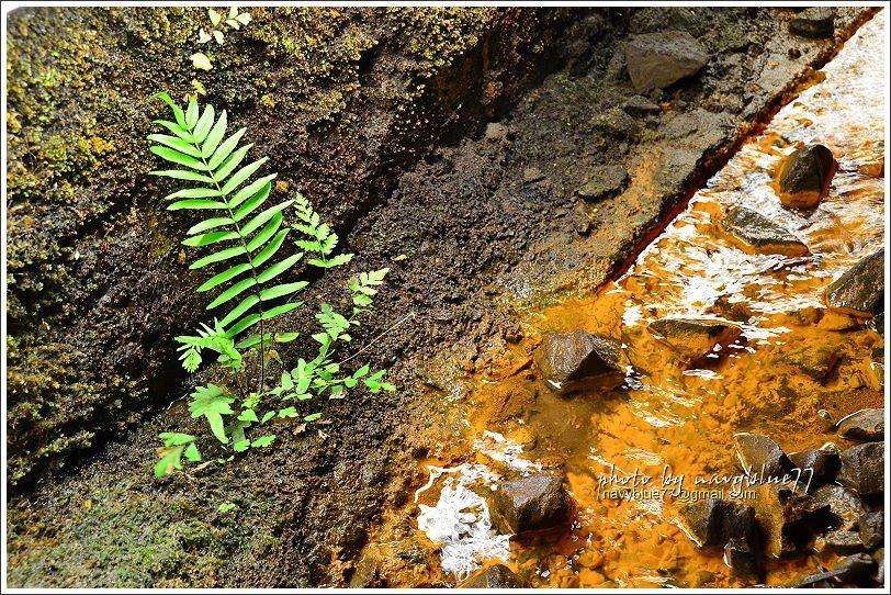 隧道兩側的小水流終年不竭,以致於能長出翠綠的蕨類。