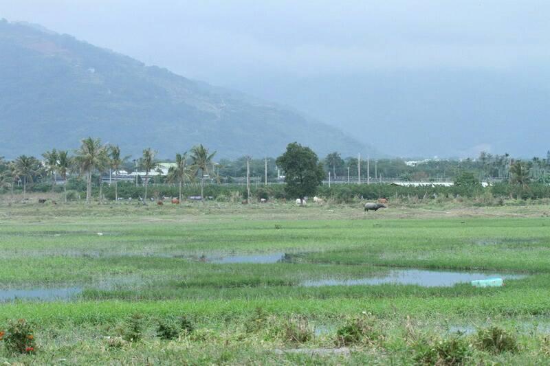 知本濕地是目前花東沿海唯一的「泥灘」環境,棲息鳥類就有近200種。圖/王克孝提供
