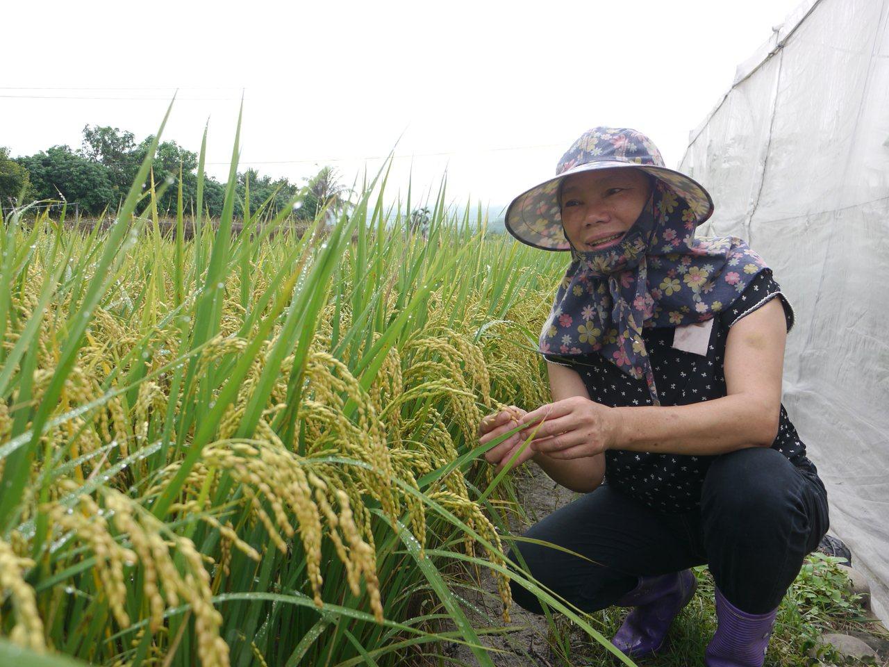 邱俊英返鄉後才投入農業,以友善耕作的方式來愛護家鄉。記者徐白櫻/攝影