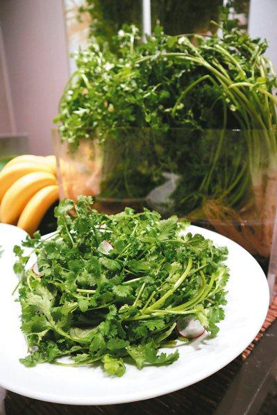 香菜不會傳染A肝,除非洗菜水中有病毒,或由帶有病毒的烹調者接觸。 本報資料照片