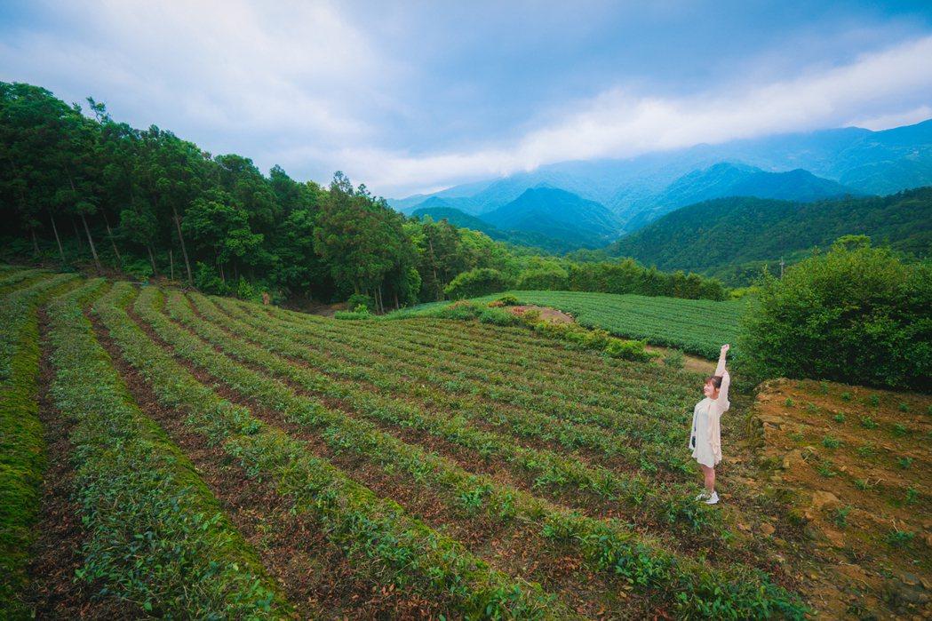 到坪林一遊,可對台灣茶文化有嶄新印象及感官體驗。 圖/新北市觀旅局提供