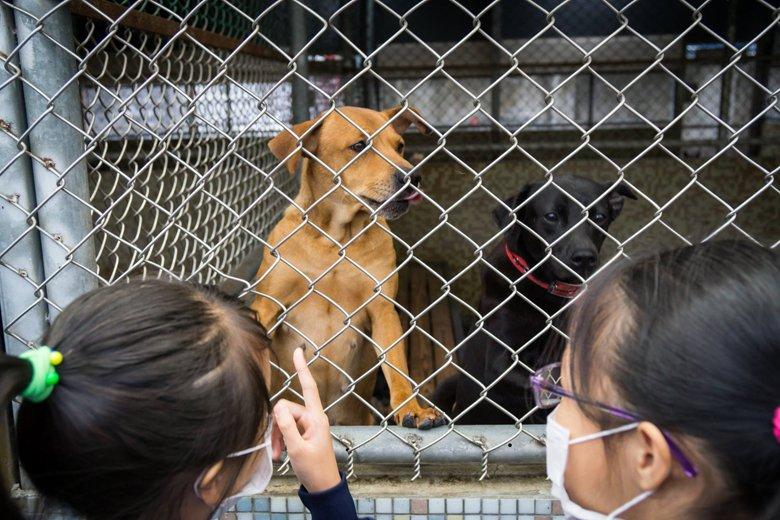 圖為中山國小學童參訪新北市板橋動物之家。 圖/取自新北市板橋區公立動物之家