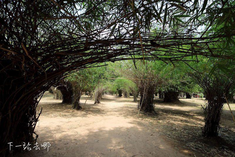 迷宮般的竹林。 賴勳毅/攝影
