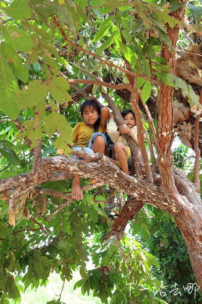樹上調皮的孩子們。 賴勳毅/攝影