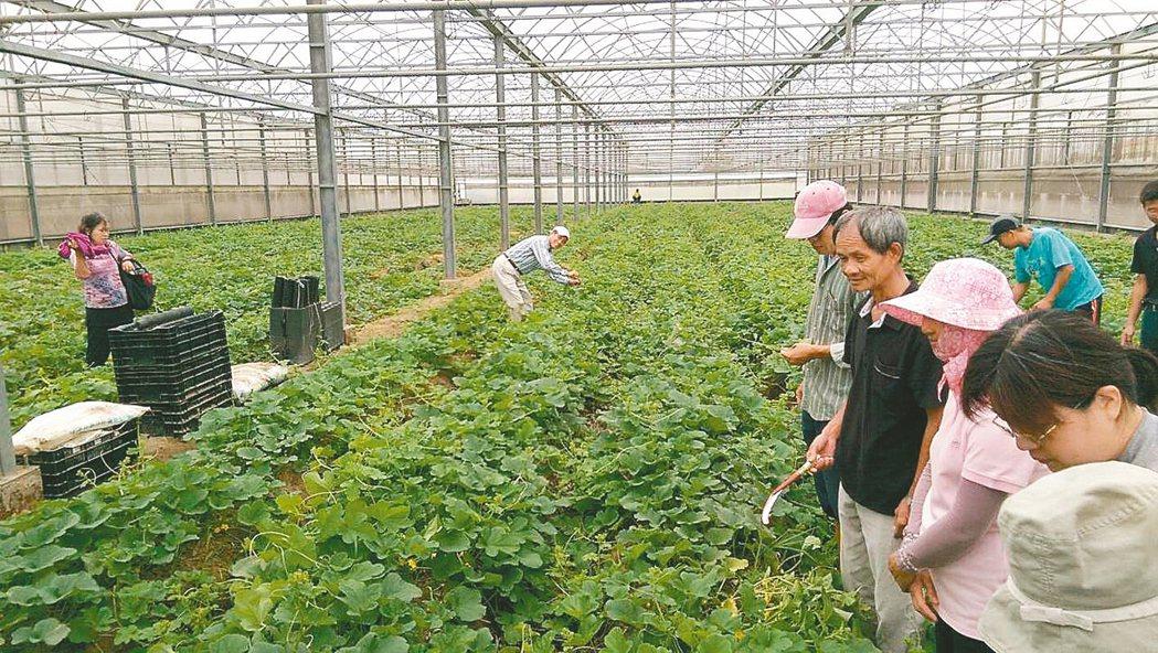 行政院會通過「有機農業促進法」草案,首度將友善耕作納入輔導目標。 圖/聯合報系資...