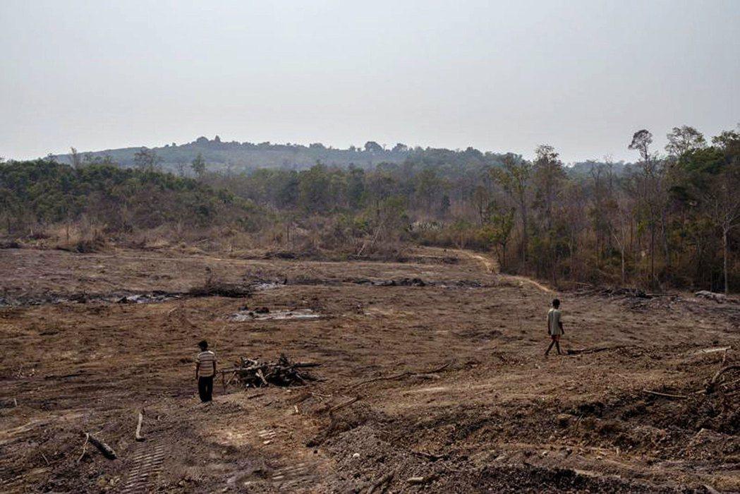 和1965年的73%森林覆蓋率的高峰相比,2016年柬埔寨僅剩49.5%。 ...