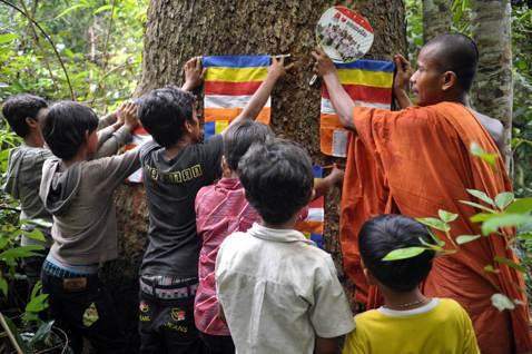 柬埔寨森林的盜伐悲歌如鬼魅般糾纏著洪森政府。圖為來自柬埔寨奧拉爾山野生動物保護區...