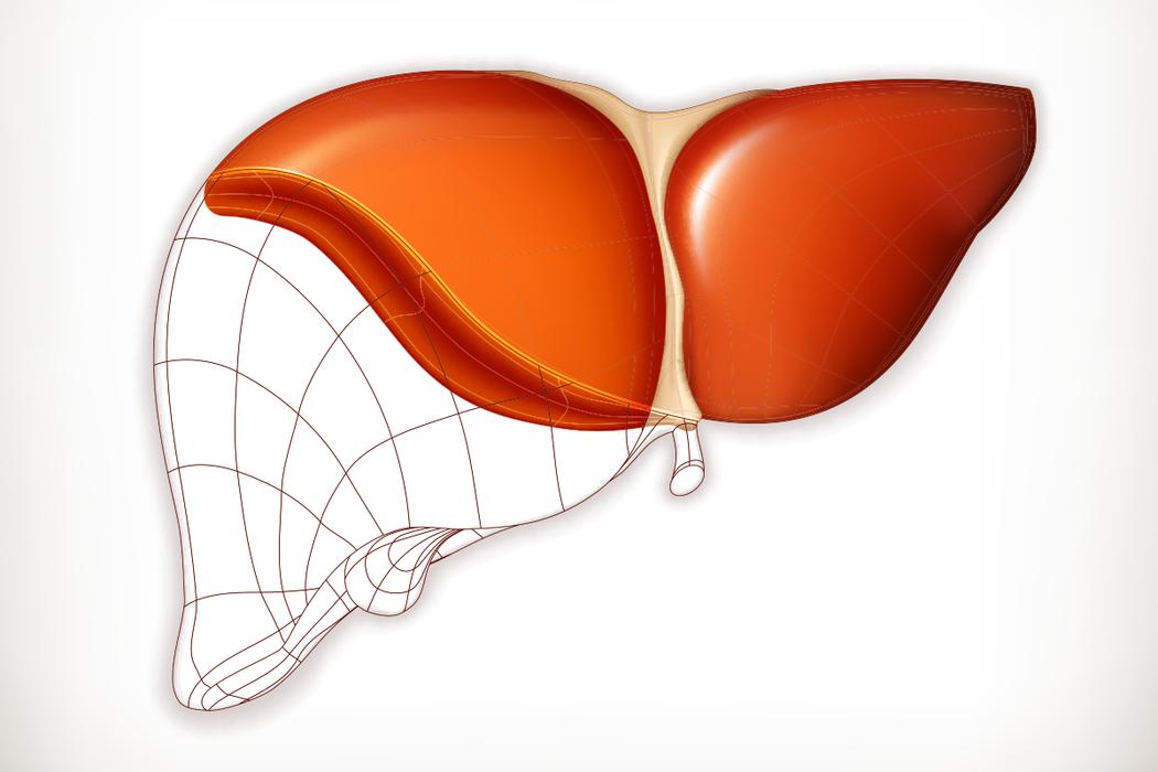 肝臟。 圖/ingimage