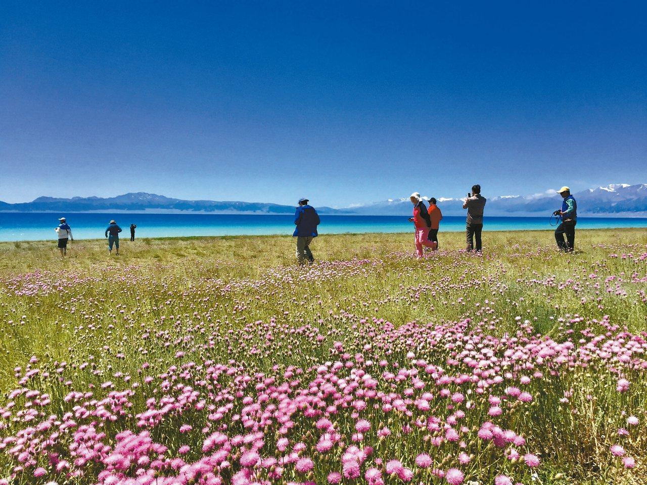 塞里木湖畔,有花更美。 記者羅建怡/攝影