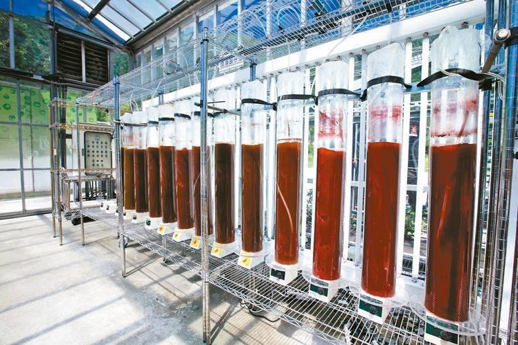 微藻被提煉出來後,就會呈現紅色,就是化妝品、保養品的原料。 圖/台泥提供